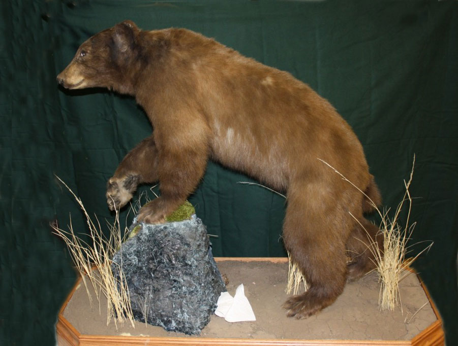 Life-size Bear, Paw Out