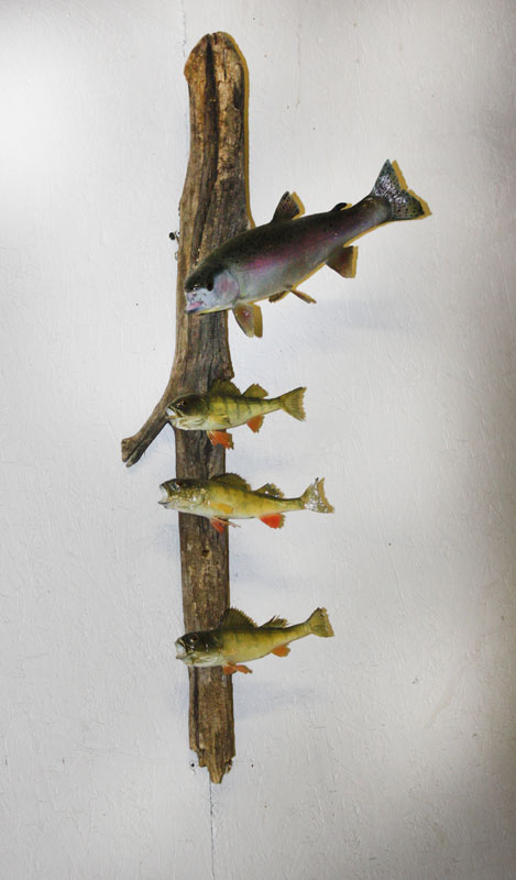 Rainbow Trout & Perch